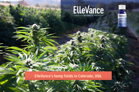 ElleVance's hemp fields in Colorado